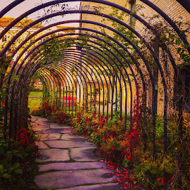 by Marianne Knudsen - City,  Street & Park  City Parks ( park, romantic, flowers )