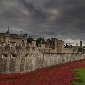 Tower of London by Brian Miller - Buildings & Architecture Public & Historical ( rememberance, tower, london, poppies, respect )