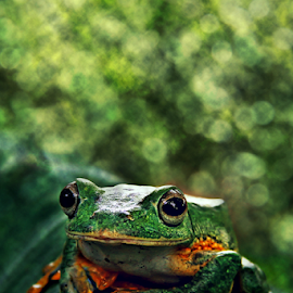 by Lay Sulaiman - Animals Amphibians (  )