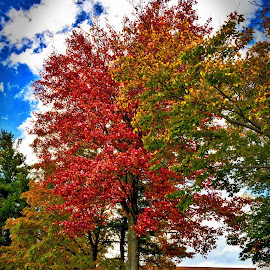 Clouds on Campus by Diane Clontz - Novices Only Landscapes ( clouds, sunyoneonta, fall colors, vibrance, trees )