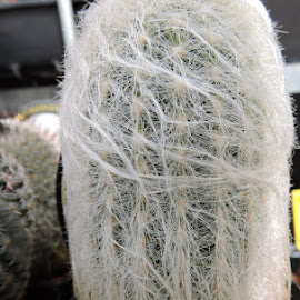 Creepy Cactus by Fiona Robinsen - Nature Up Close Other plants ( nature, plants, leaves, rocks,  )