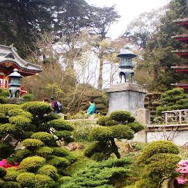 Japanese Garden by Holly Herrmann - City,  Street & Park  City Parks ( san francisco )