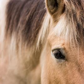 Eye Eye by Gavin Hewitt - Animals Horses ( horse )