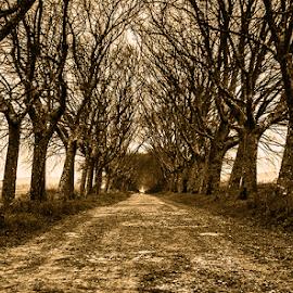 Avenida by José Costa Ferro - Nature Up Close Trees & Bushes