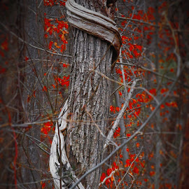 Wrapped Up by Brant Stevenson - Nature Up Close Trees & Bushes