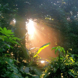 Sun ray @ Diary Farm trail... by Chin KK - Landscapes Forests ( android; sun ray; forest; morning; dairy farm )