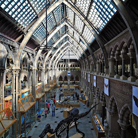 NHM in Oxford by Almas Bavcic - Buildings & Architecture Other Interior