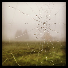 Eeeeew-y Dewy morning by Erik Bishoff - Instagram & Mobile iPhone ( springfield, oregon, spiderweb, web )