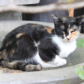 Taking a nap by Dura Zaman - Animals - Cats Portraits ( potrait, cat, putrajaya, malaysia, animal )