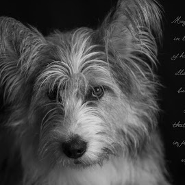 by Jacqui Sjonger - Typography Captioned Photos ( pet portrait, motivational, pet photography, quote, black & white, dog portrait, cute, typography, dog, emotion, inspirational )