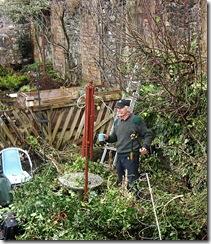 colin garden ivy
