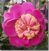 Ingliston flowers 5