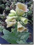 craigieburn flower