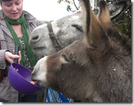 donkeys feeding time2