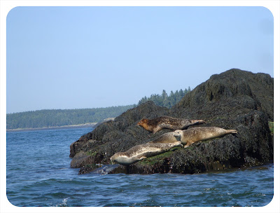 seals in New Brunswick