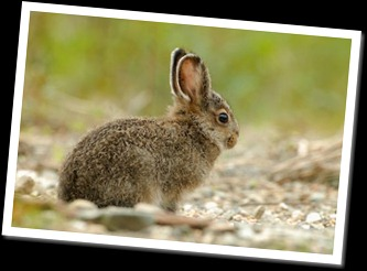 hare-baby_7487