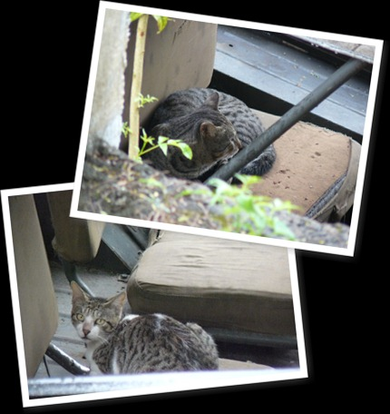 View feral cats 2