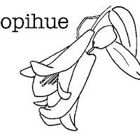 COPIHUE.JPG