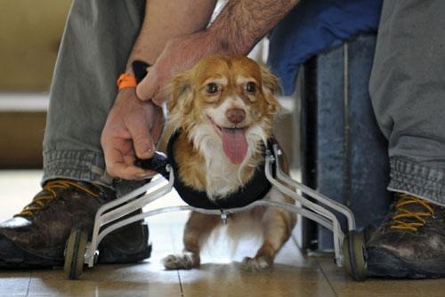 roller-dog2