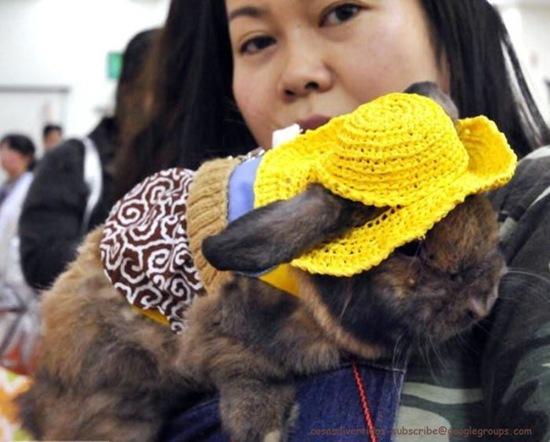conillconejos disfrazdos (10)