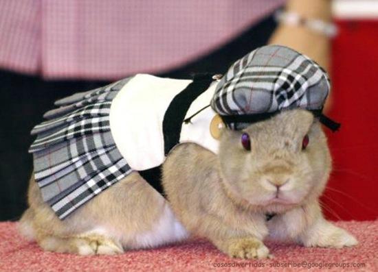 conillconejos disfrazdos