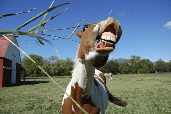 animales divertidos (8)