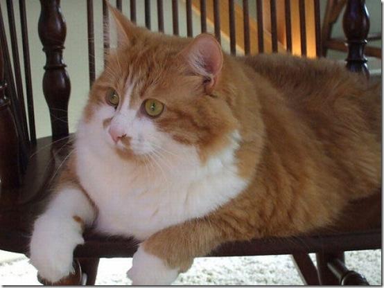 fat_cats_36