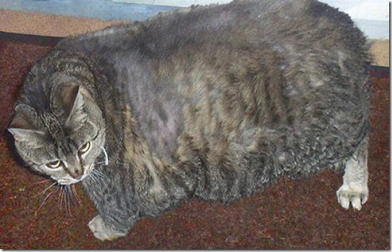 fat_cats_11