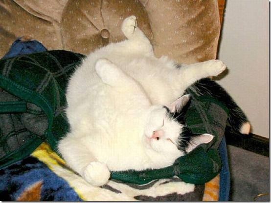 fat_cats_49