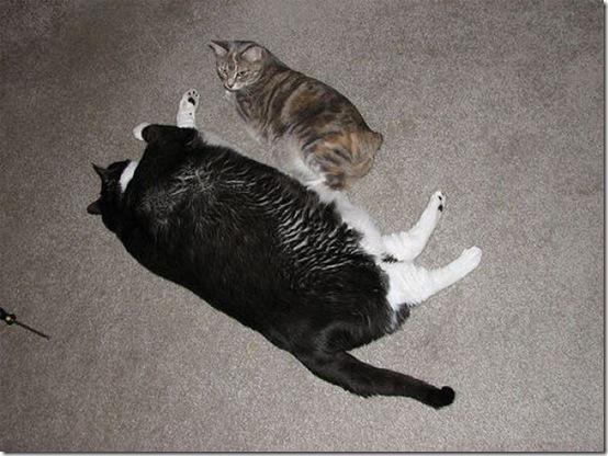 fat_cats_12