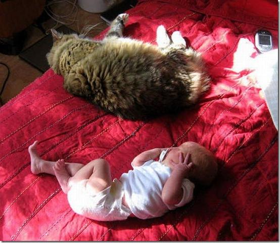 fat_cats_22