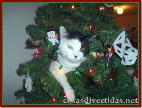 cosasdivertidas.net  gatos (4)
