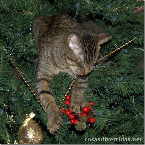 cosasdivertidas.net  gatos (14)