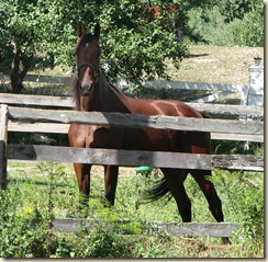 09 12 Chestnut horse