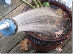 10 26 Watering
