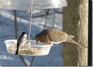 12 26 Dove n Chickadee