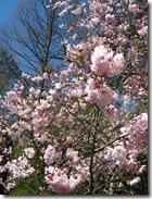 2010 spring 022