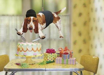 foto foto anjing lucu