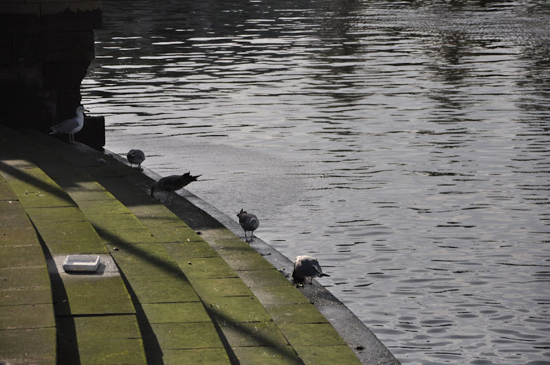 Чайки в Фаро
