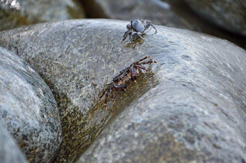Мелкие крабики, гора Аю-Даг, Партенит
