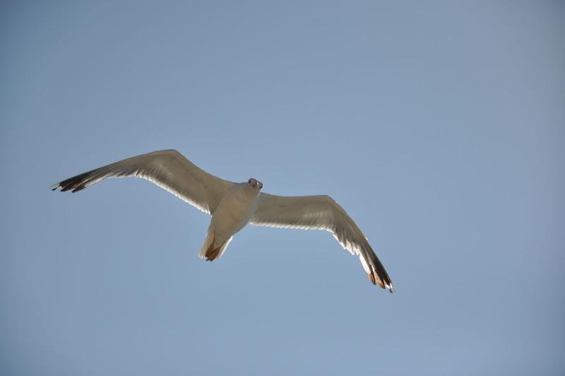 Чайка над Херсонесом