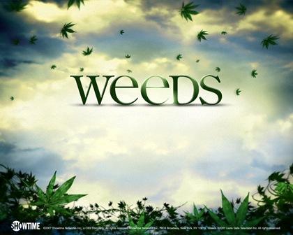 weeds-wall-weeds-1015221_1280_1024