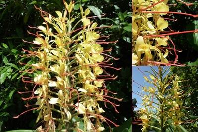 Ver flor amarela pico