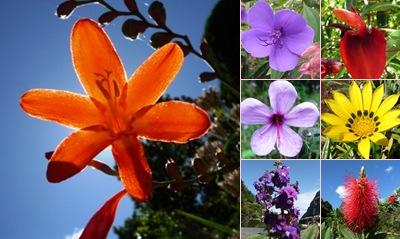 Ver flores madeira