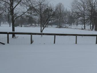 2nd snow 012910 (2)
