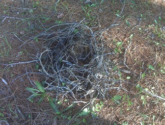 Nest on our walk at the park
