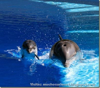 Monde animal-dauphin