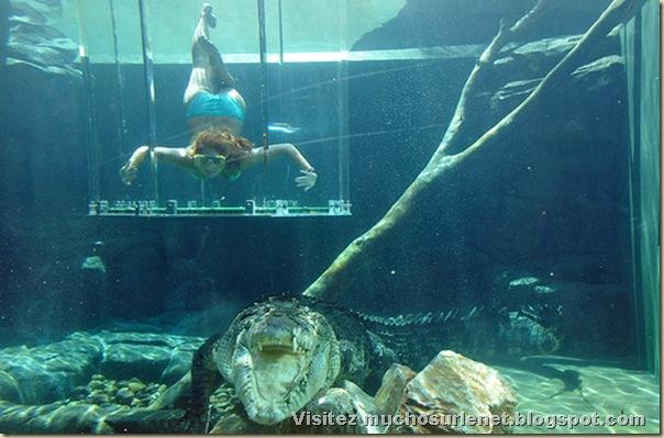 Nager avec les crocodiles_Parc Crocosaurus Crique-2