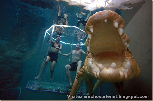 Nager avec les crocodiles_Parc Crocosaurus Crique-3