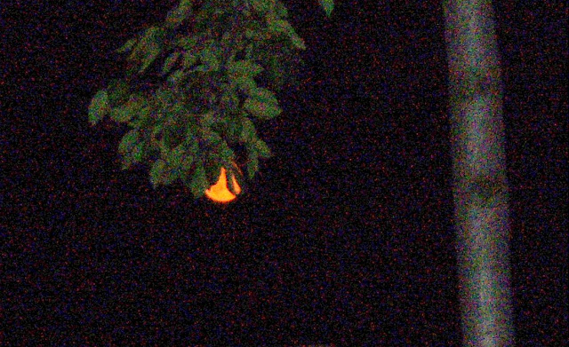 Orange Moon in Tree
